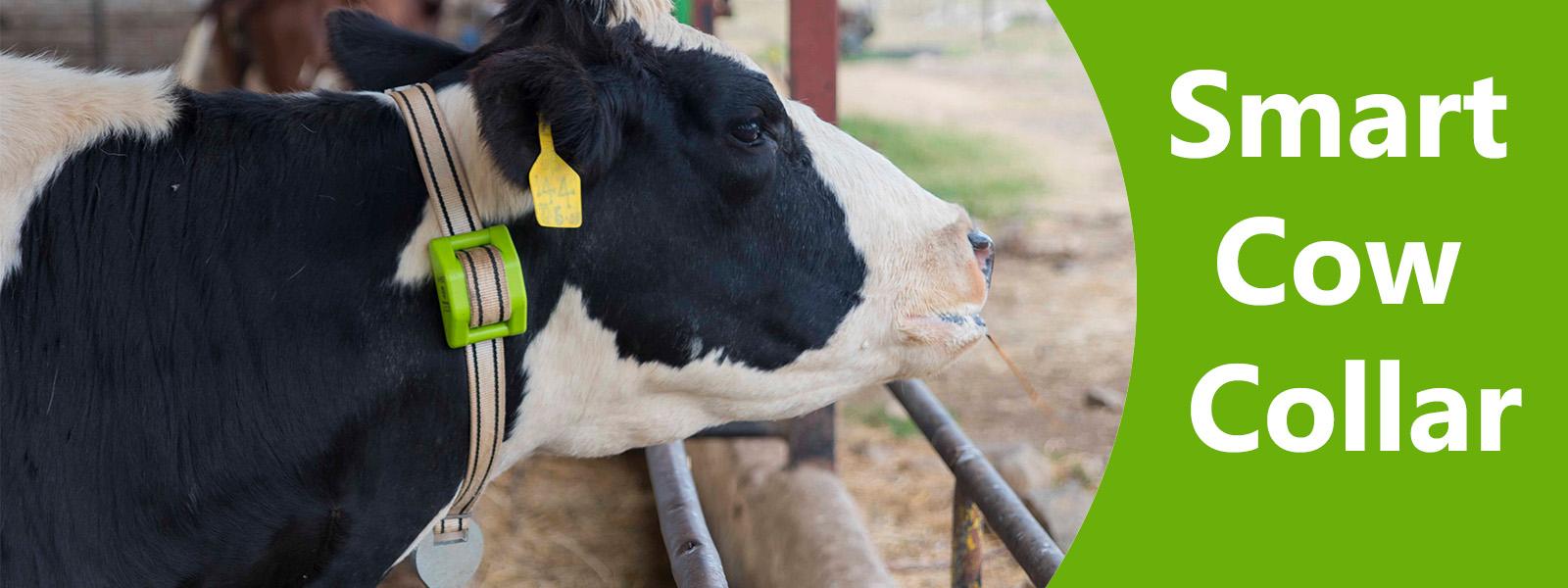 Smart Cow Collar